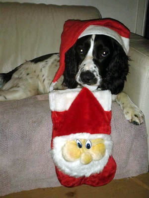 Springer Rescue for Scotland